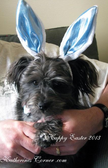 Easter puppy Katherines Corner