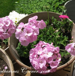 leave room in your containers for flowers to grow