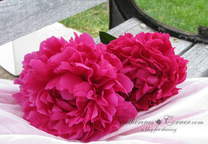 fuchsia  colored peonies-katherines corner