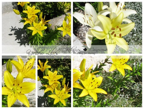 yellow lilies
