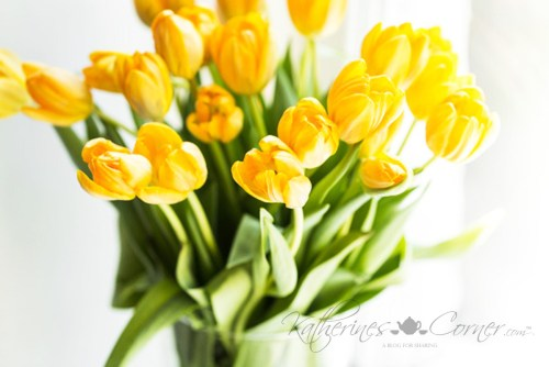 yellow tulips from stephs garden