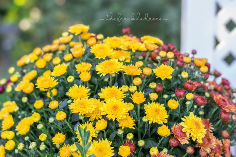 5 blooming Autumn flowers