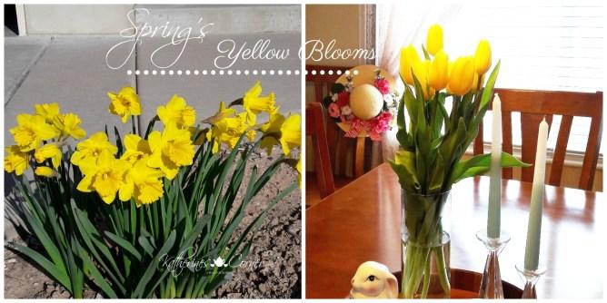 springs yellow blooms katherines corner