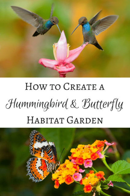 diy hummingbird and butterfly garden