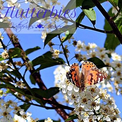 flutterbies katherines corner