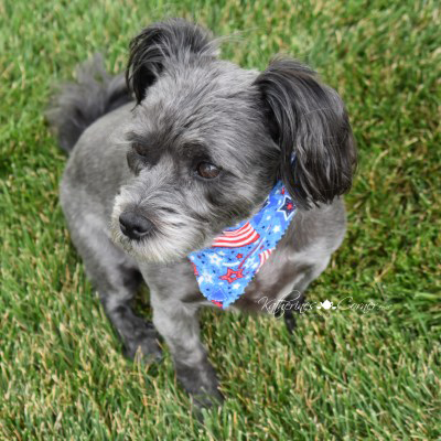happy 4th of July 2021, pet safety