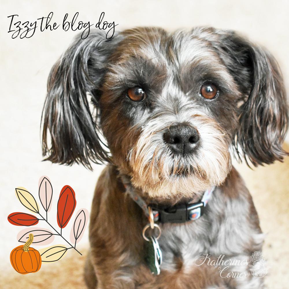izzy the blog dog schapso