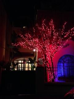 Red Tree House's landmark tree at night