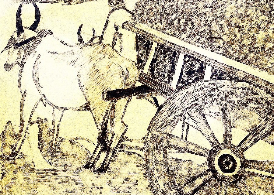 Farmer with Bull Cart