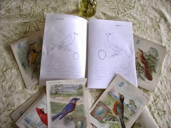 Bird Coloring Book by Kathleen O'Brien