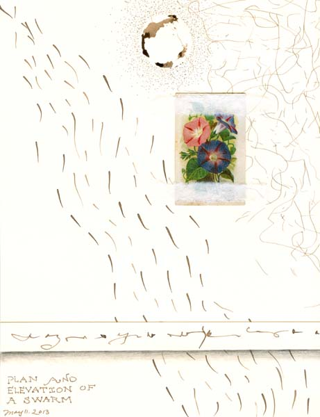 """Kathleen O'Brien, """"Plan and Elevation of a Swarm"""", Walnut Ink drawing with Arm & Hammer card"""