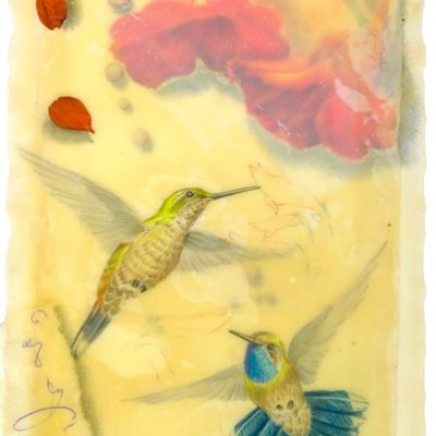 Blue Throated Hummingbirds, Giclee print