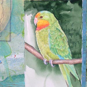 """Song for Superb Parrot"" collaged drawing, detail Kathleen O'Brien"