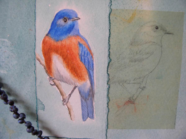 "Kathleen O'Brien, ""Talisman for Western Bluebirds"", process, detail of drawings of Bluebirds"