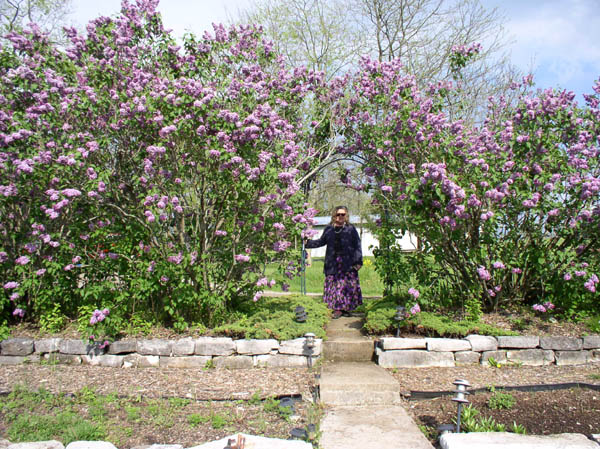 Lilacs Surround Sumwise Farm and Sanctuary on the East