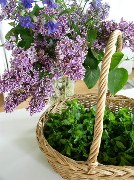 Lilacs, Mint, Columbine from Sunwise Farm & Sanctuary by Kathleen O'Brien