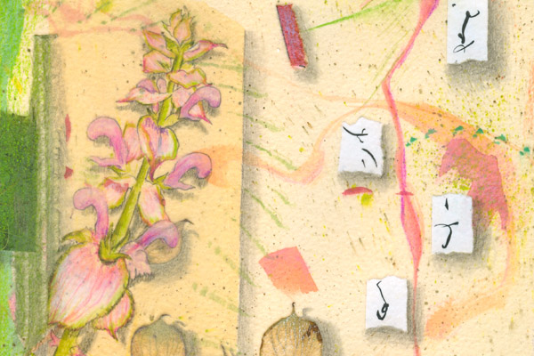 """Clary Sage Flower Essence drawing, detail from """"Bee Dream 6"""" by Kathleen O'Brien"""