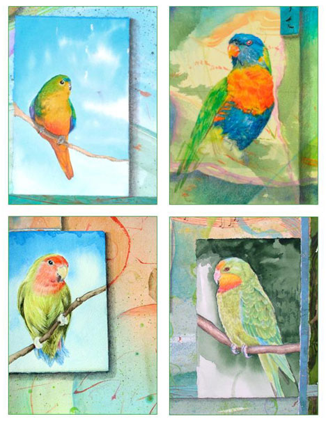 Parrot Card Set Kathleen O'Brien
