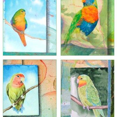 Parrot Card Set Kathleen O'Brien