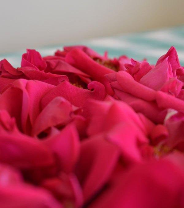 La Vie En Rose, Happy 100th Birthday, Edith Piaf