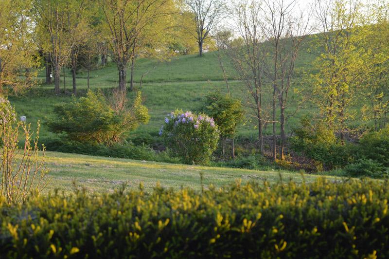 South hillside at Sunwise Farm and Sanctuary