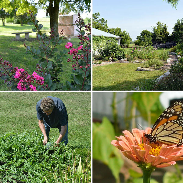 Summer Gardens at Sunwise Farm and Sanctuary July 2016