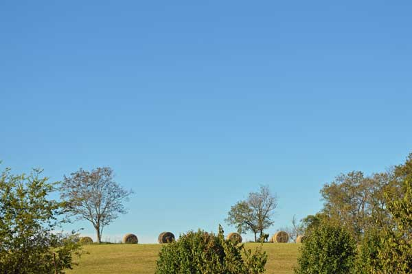 7 round shapes - hay bales on a large day at  Sunwise Farm and Sanctuary