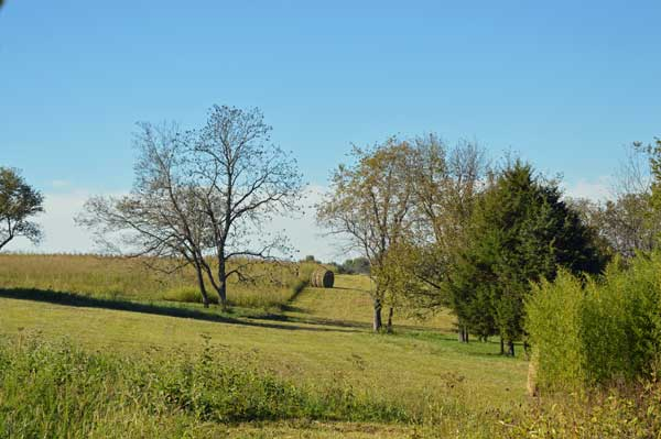 Clear Cut, hay bale at  Sunwise Farm and Sanctuary