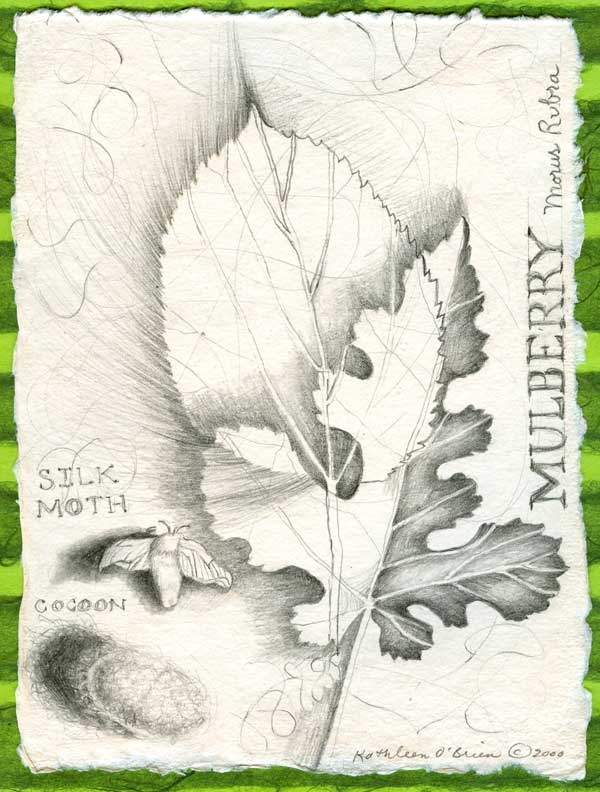 "Mulberry,Pleasant Hill Botanicals, drawing by Kathleen O'Brien at the ""225: Artists Celebrate Kentucky's History"" exhibit at the KY Artisan Center, Berea"