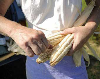 Jennifer Gleason holding Hickory King, an heirloom non-GMO open pollinated white corn, photo used with permission