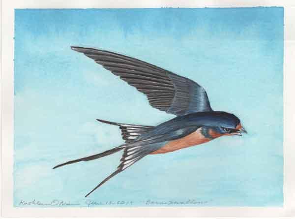 "© Kathleen O'Brien, ""Sunwise Barn Swallow"", gouache,"