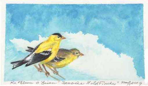 Sunwise Goldfinches, ©Kathleen O'Brien