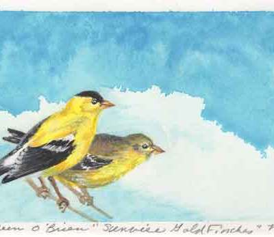 16 Sunwise Goldfinches, ©Kathleen O'Brien