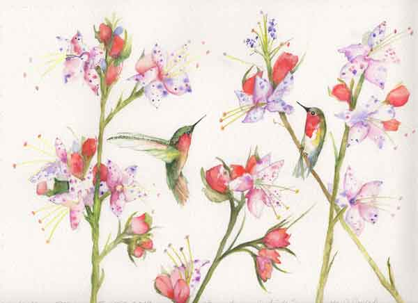 18 Busy Hummingbirds, ©Kathleen O'Brien