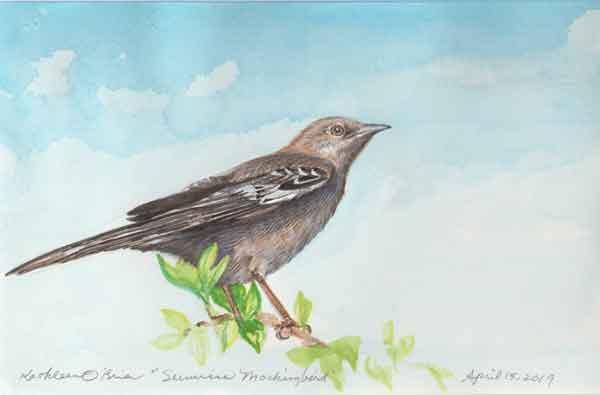 22 Sunwise Mockingbird, ©Kathleen O'Brien