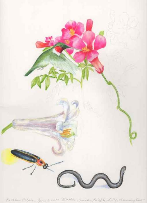 24 Birthday Snake, Firefly, Lily, Hummingbird, ©Kathleen O'Brien