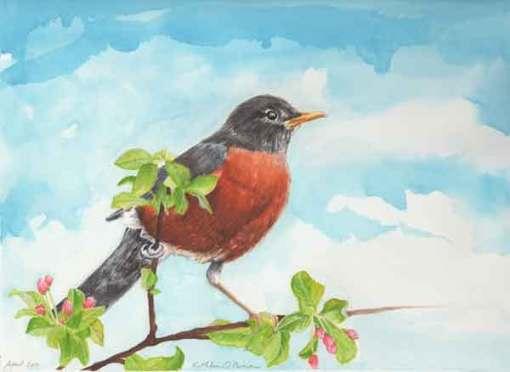 Sunwise Robin, ©Kathleen O'Brien