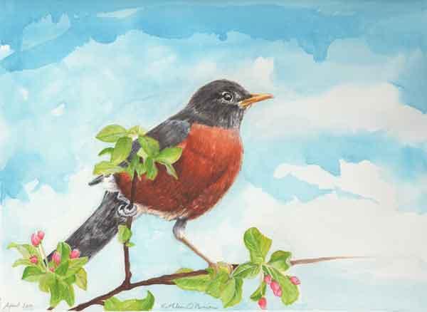 26 Sunwise Robin, ©Kathleen O'Brien