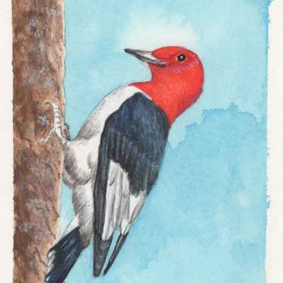 30 Solstice Woodpecker, ©Kathleen O'Brien