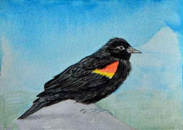 36 Sunwise Blackbird 2, ©Kathleen O'Brien