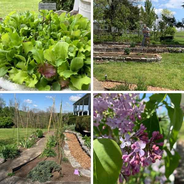 views of Sunwise gardens