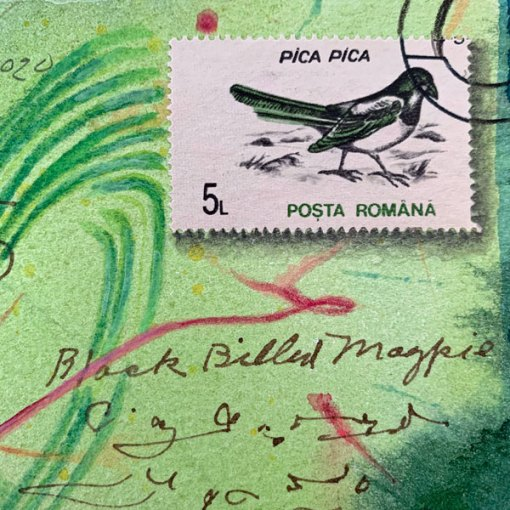 Dear Black Billed Magpie, detail, ©Kathleen O'Brien