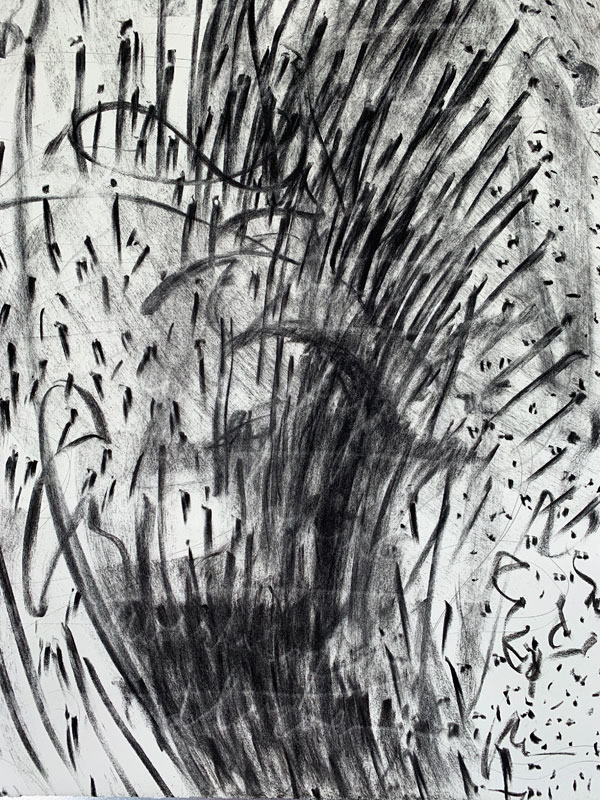 Vine Charcoal drawing by Kathleen O'Brien