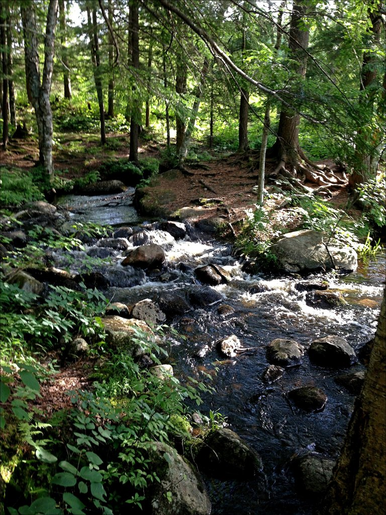 The Bog River