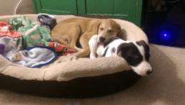 Pup snuggles