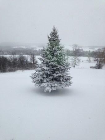 Outdoor Tree in Snow