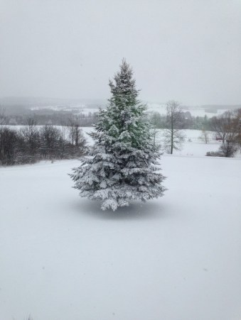 Outdoor Tree in Snow