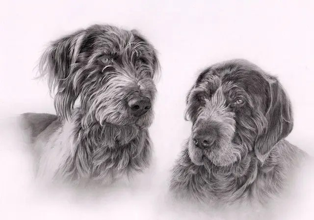graphite, dogs, drawing, pencil, Kathrin Guenther, art