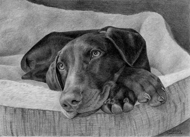 German Pointer by Kathrin Guenther, graphite drawing, pet art