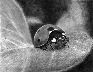 ladybird, graphite drawing, Kathrin Guenther, web file
